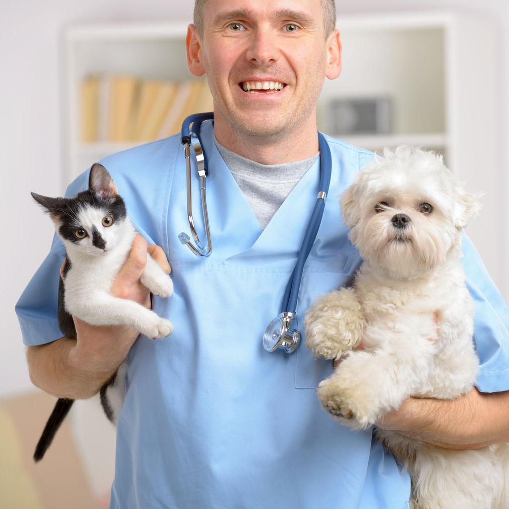 Ветеренар в картинках